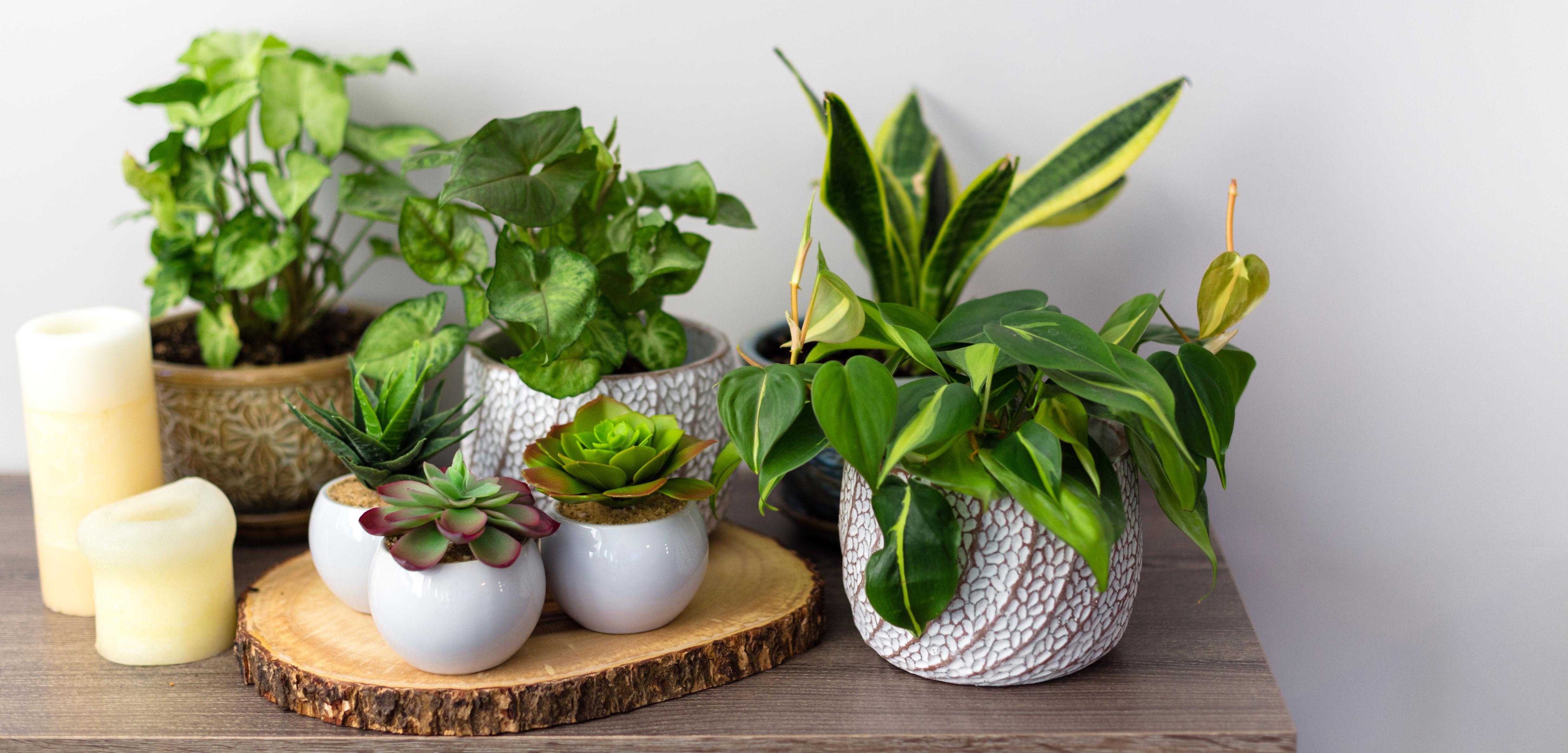 Interior_Plants_Pots